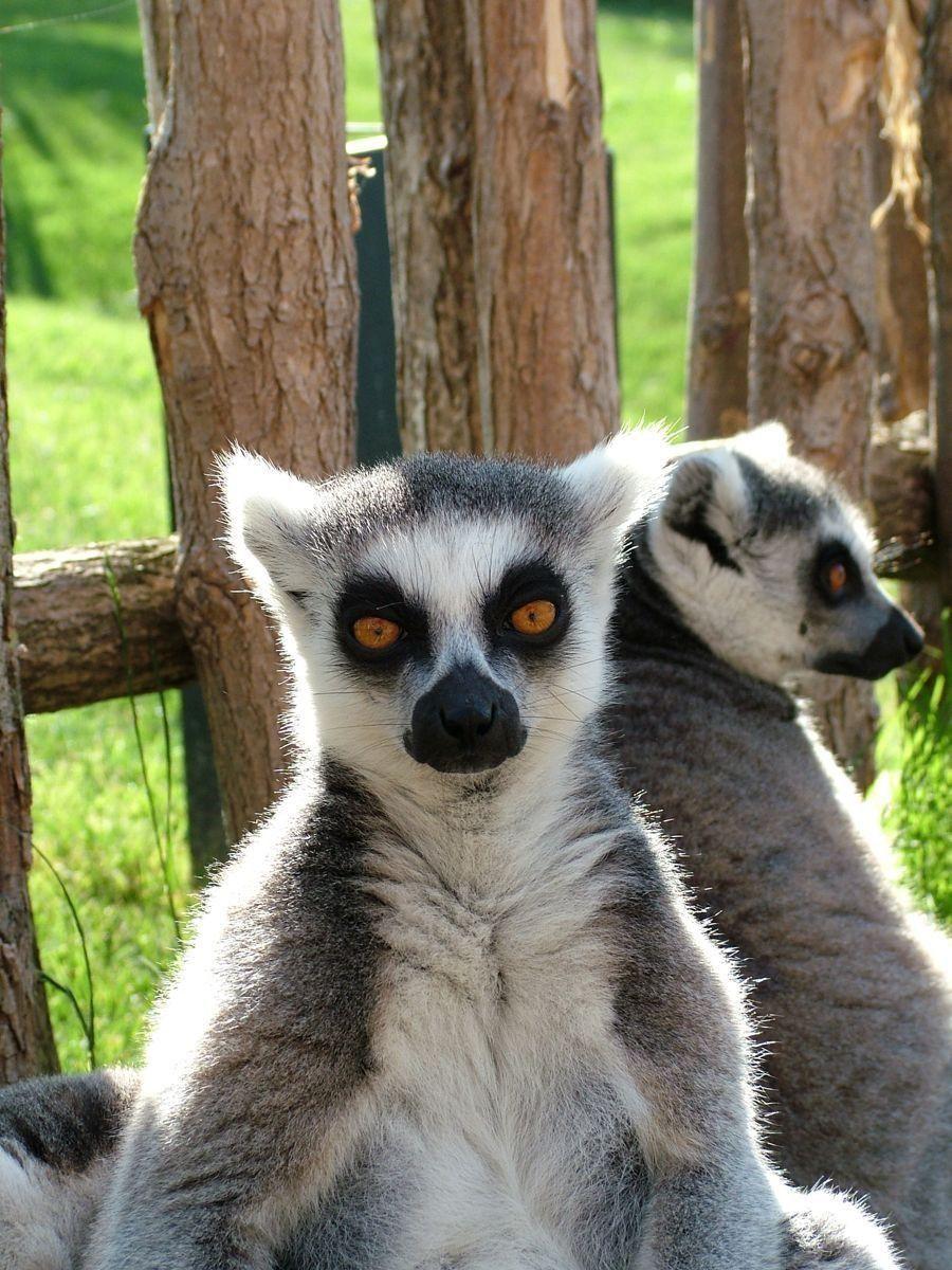 Q Son Los Lemures pero tambien porque es una