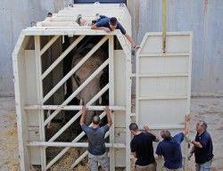 Traslado de la elefanta Greta - Bioparc Valencia 27-8-12