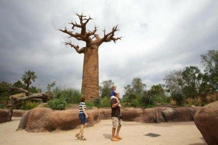 ZOOM TORINO - MADAGASCAR