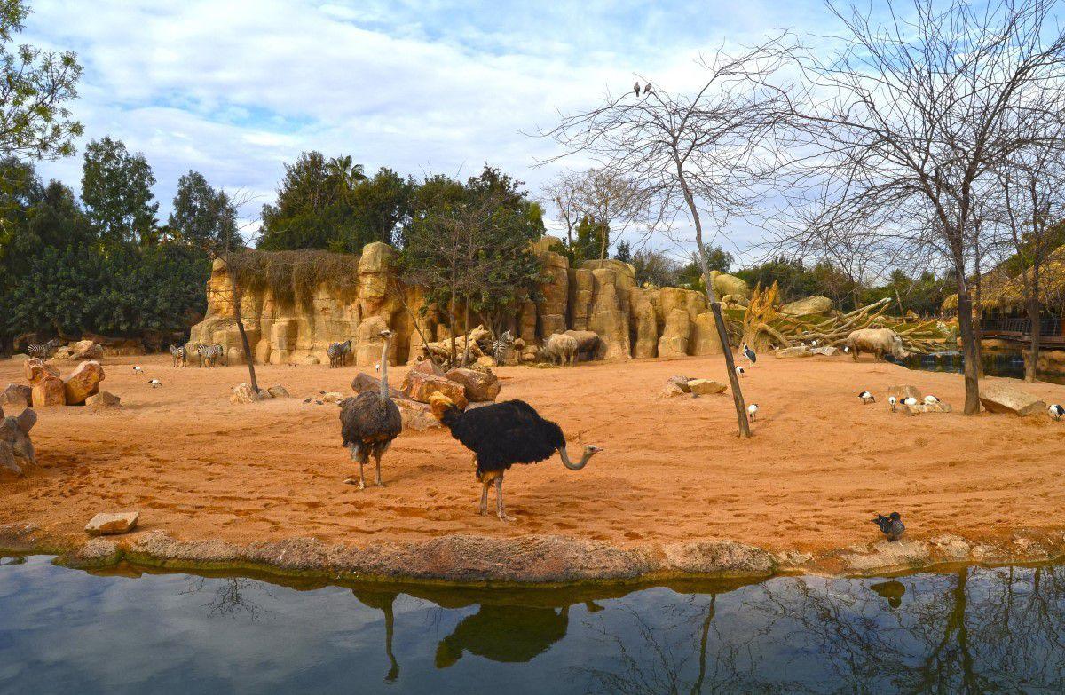 la sabana de bioparc valencia en obras bioparc valencia