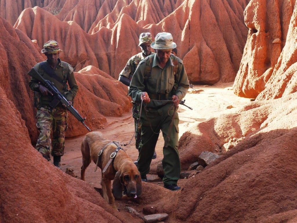 Brigada Bloodhound siguiendo un rastro en Ol Jogi (Kenya)