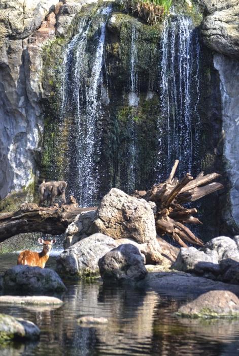 BIOPARC Valencia se une a la celebración del Día Mundial del Agua - Bosque ribereño