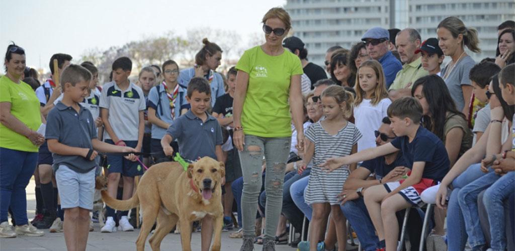 Gina, Pitita, y Greta encuentran un hogar en el 10º desfile AUPA y BIOPARC Valencia