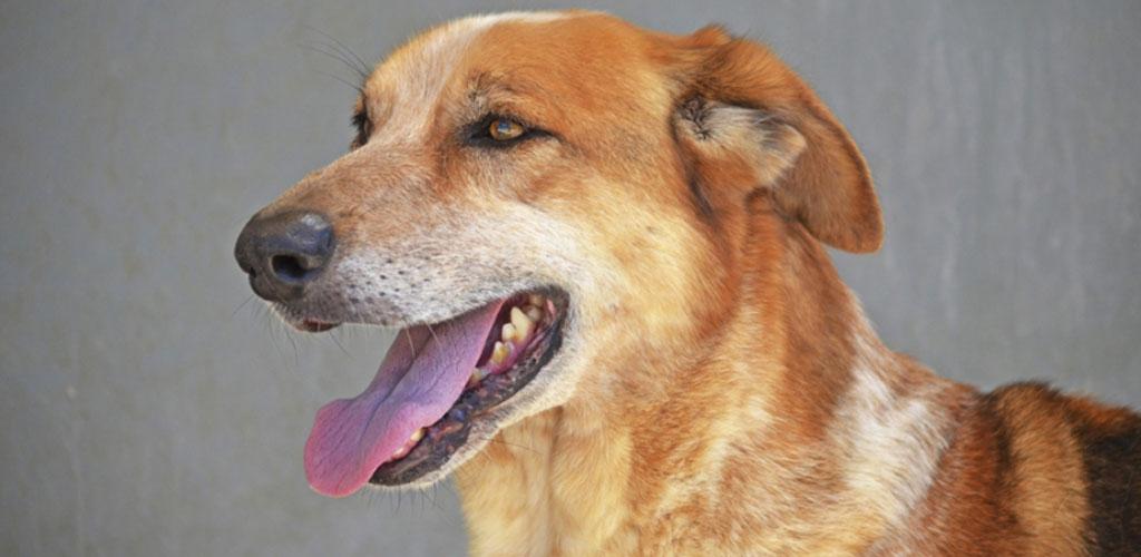 10º desfile solidario de perros de AUPA y BIOPARC Valencia para fomentar las adopciones