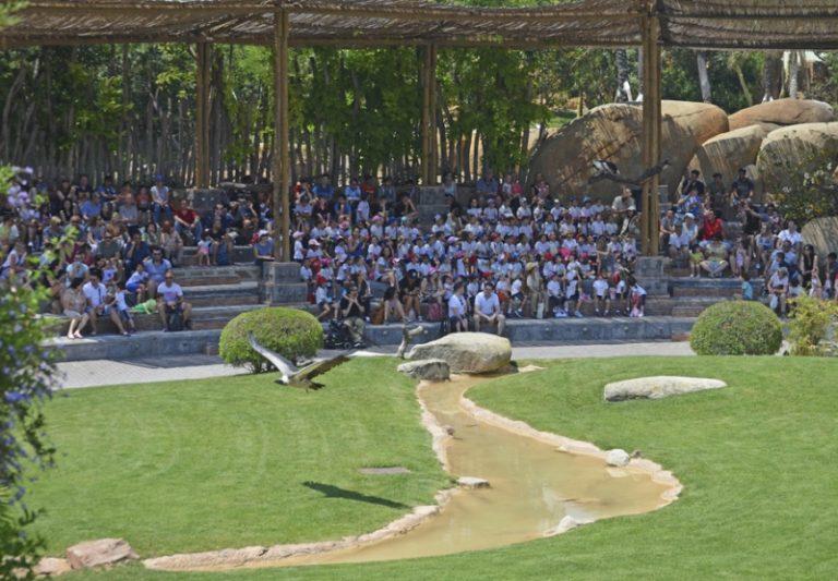 7 de las 11 especies africanas de buitres están en peligro de extinción y BIOPARC Valencia acoge varias de ellas