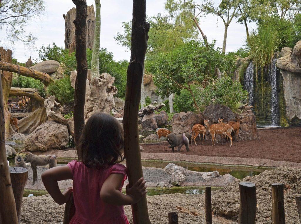 Cara a cara con los animales salvajes en BIOPARC Valencia