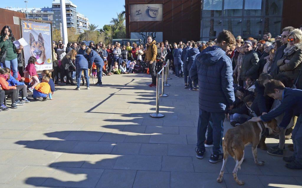El desfile AUPA/BIOPARC el regalo de Navidad responsable para perros y personas