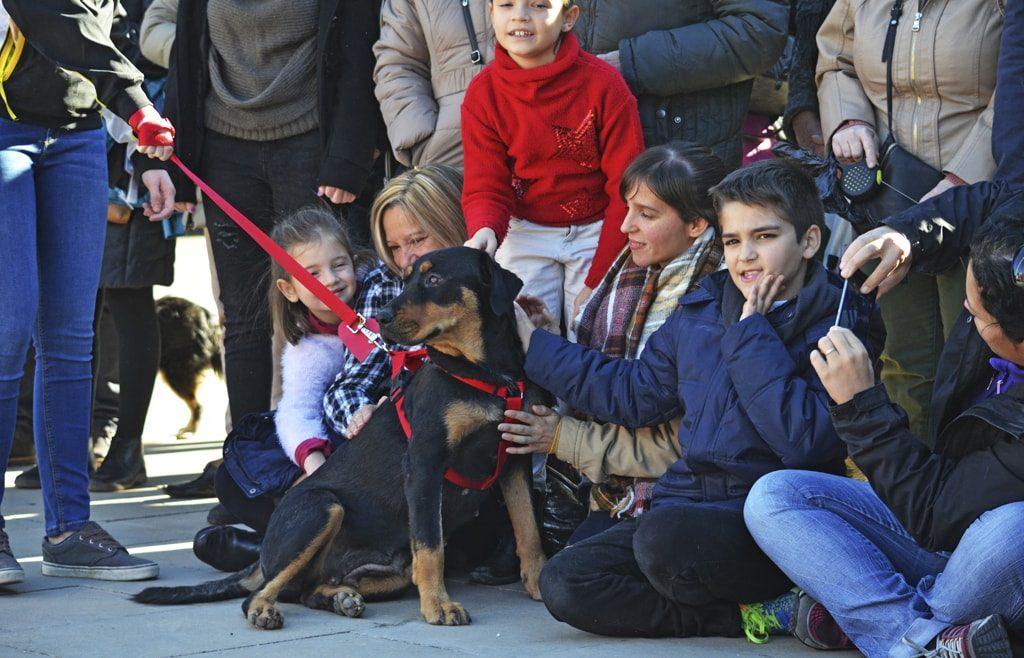 El regalo de Navidad responsable para perros y personas