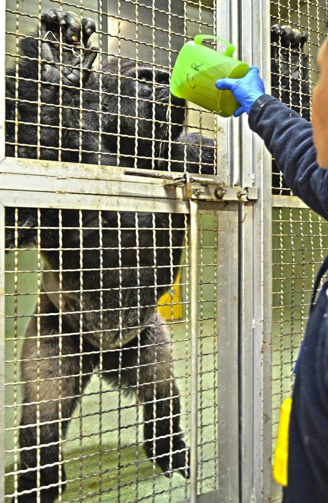 Por la ola de frío BIOPARC Valencia pone en marcha medidas especiales para los animales