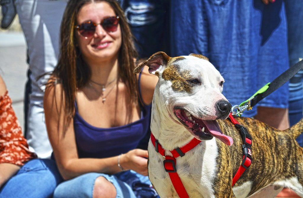 Numerosos perros han encontrado un hogar y se ha recordado que la adopción es la opción más comprometida para quienes deciden asumir la responsabilidad que supone tener una mascota.