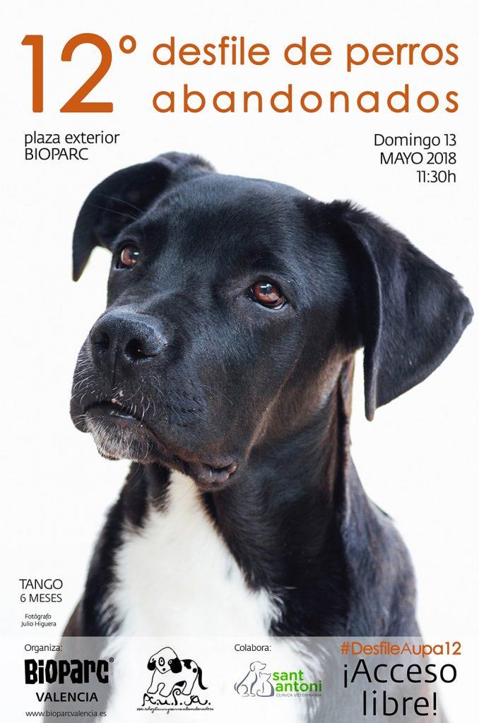12º desfile solidario AUPA / BIOPARC para fomentar la adopción de perros abandonados