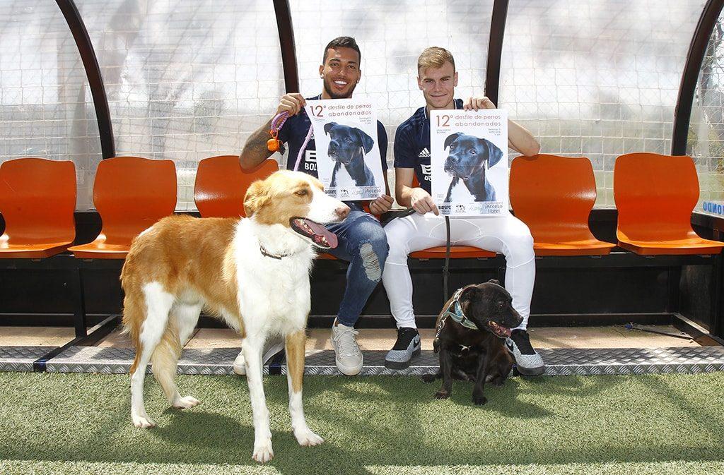 El deporte valenciano se vuelca con el Desfile de perros abandonados de este domingo en BIOPARC