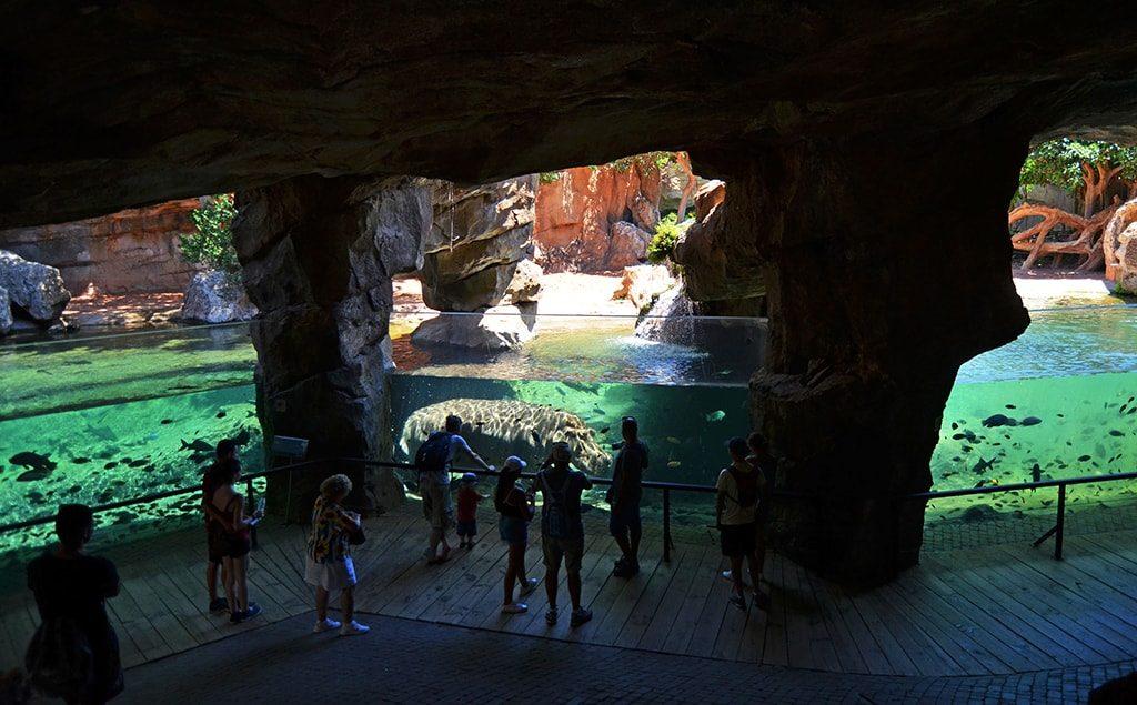Visitantes observando a los hipopótamos en la cueva de Kitum de BIOPARC