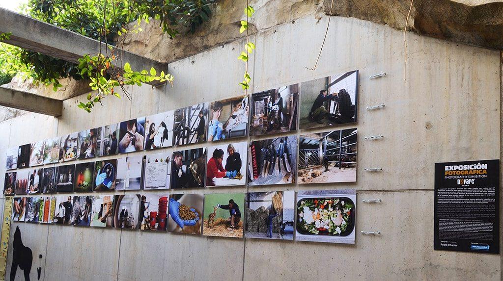A través de 63 fotografías ubicadas en diferentes localizaciones del parque podremos conocer lo que hay detrás de las #ExperienciasBioparc.