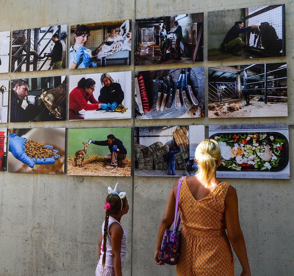 """BIOPARC Valencia muestra """"lo que no se ve"""" en una exposición fotográfica"""
