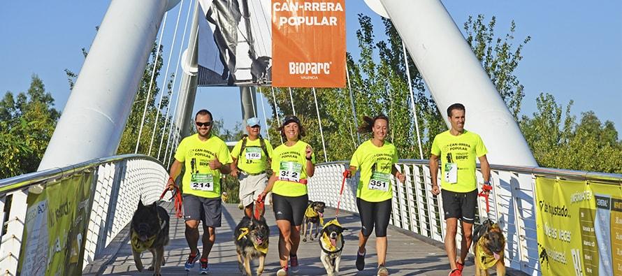 Personas y sus perros corren la 6ª Can-rrera de BIOPARC Valencia para salvar a los rinocerontes