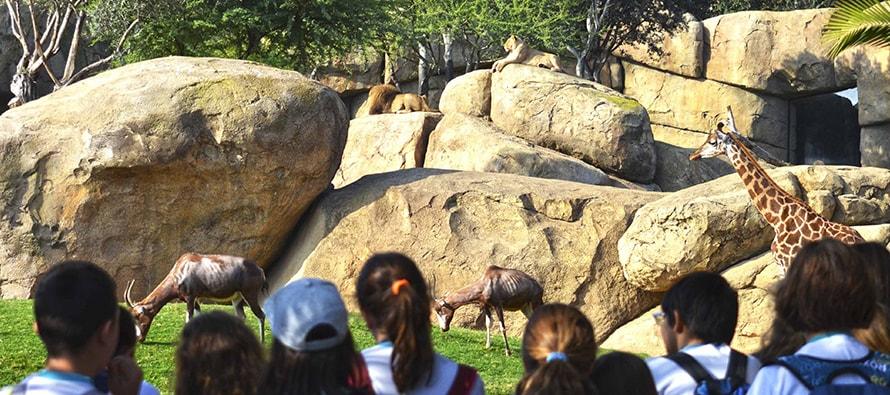 Una nueva oferta educativa de BIOPARC Valencia para respetar y proteger la naturaleza
