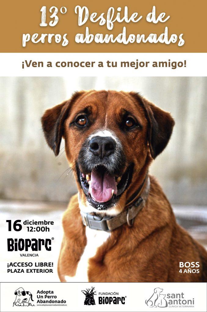 El desfile para adoptar perros abandonados de A.U.P.A y BIOPARC será el domingo 16 de diciembre