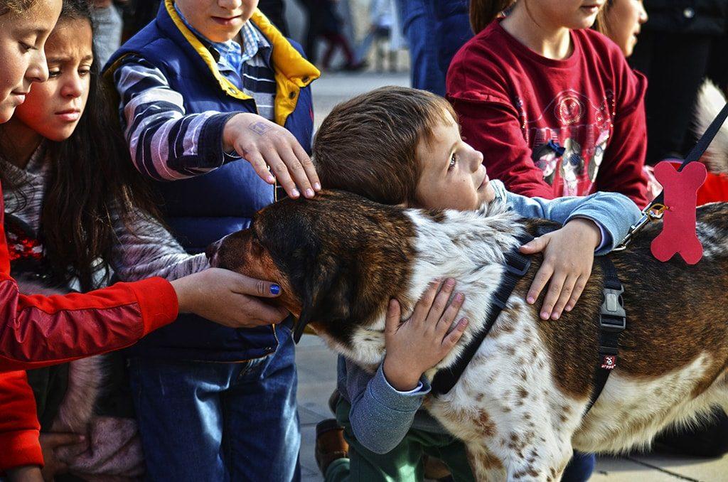 Momentos durante el 13º desfile solidario de perros abandonados
