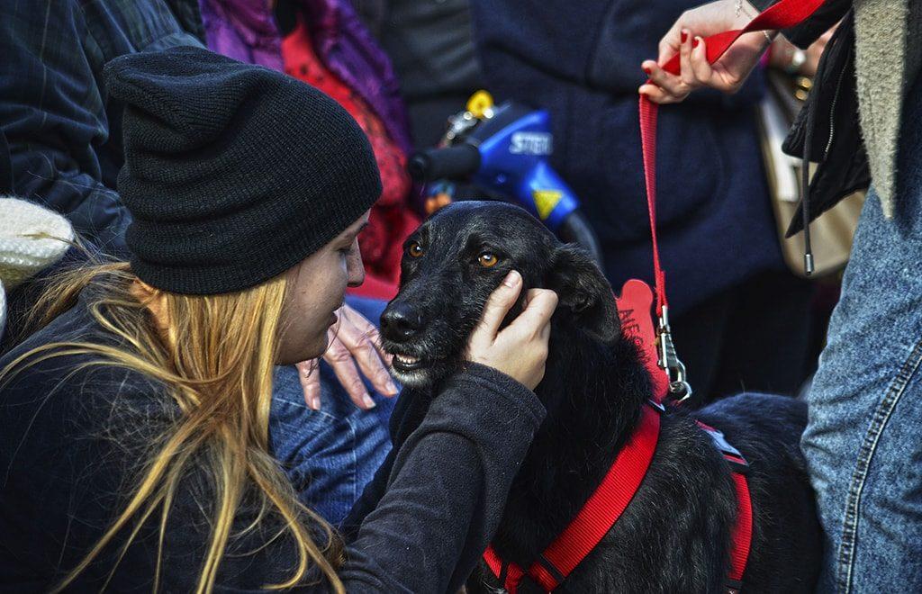 Momento durante el 13º desfile solidario de perros abandonados