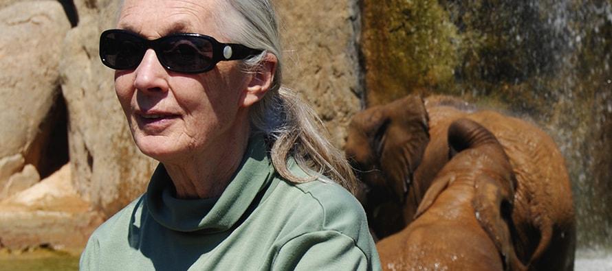 """BIOPARC rinde homenaje a las """"damas de los grandes simios"""" - Día de la Mujer"""