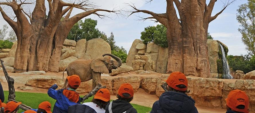 """Primer día de Expedición África en BIOPARC Valencia con los """"expertos en elefantes"""""""