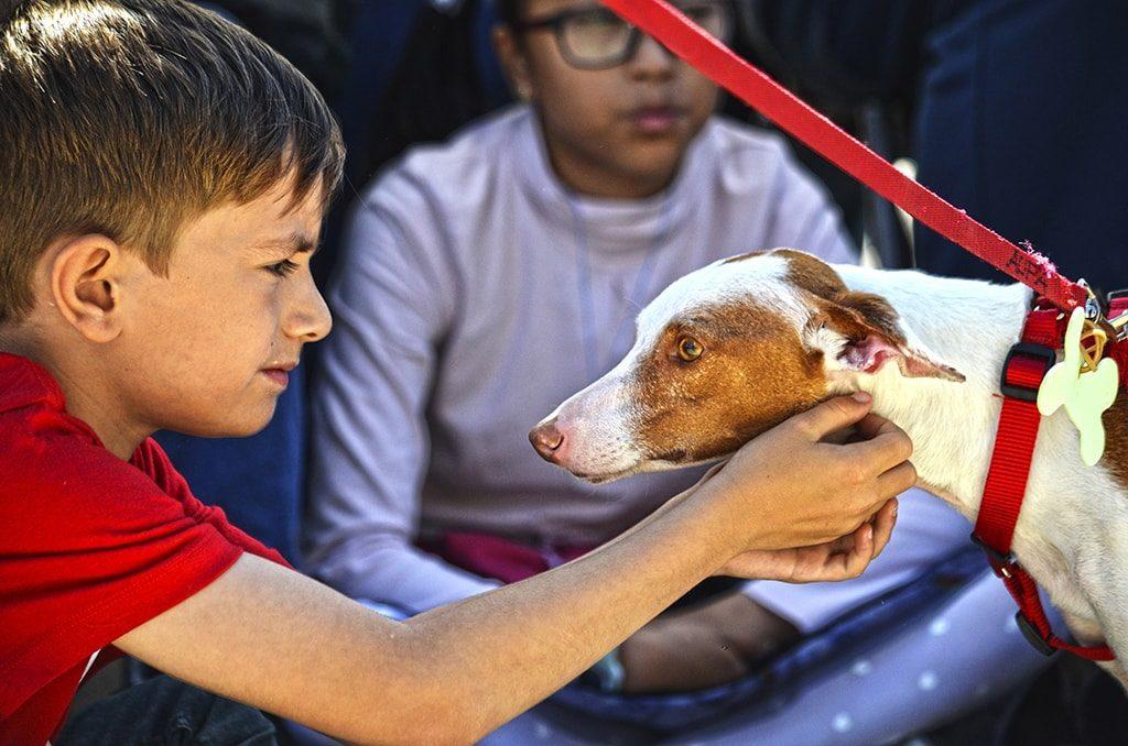 Emotivo momento durante el 14 desfile de perros abandonados