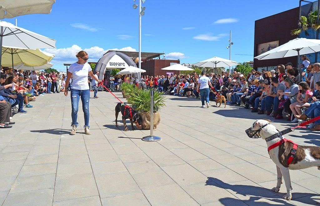 Éxito de asistencia del 14º desfile solidario de perros abandonados AUPA - BIOPARC