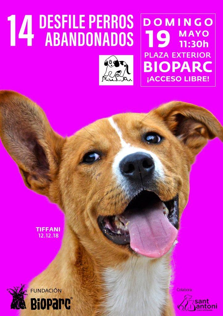 Cartel 14 desfile solidario de perros abandonados AUPA - BIOPARC