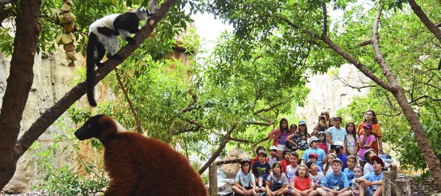 BIOPARC Valencia conmemora el Día de la Biodiversidad y abre las inscripciones de su escuela de verano
