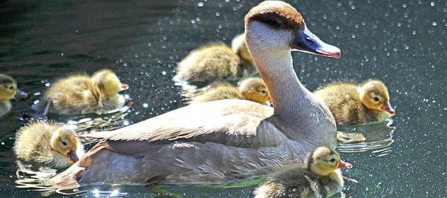 BIOPARC Valencia lanza una nueva modalidad de pase anual B! para dos personas y siguen los nacimientos de primavera