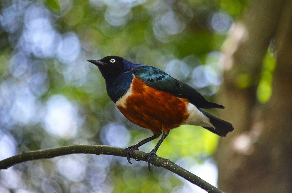 BIOPARC Valencia conmemora el Día de las aves migratorias