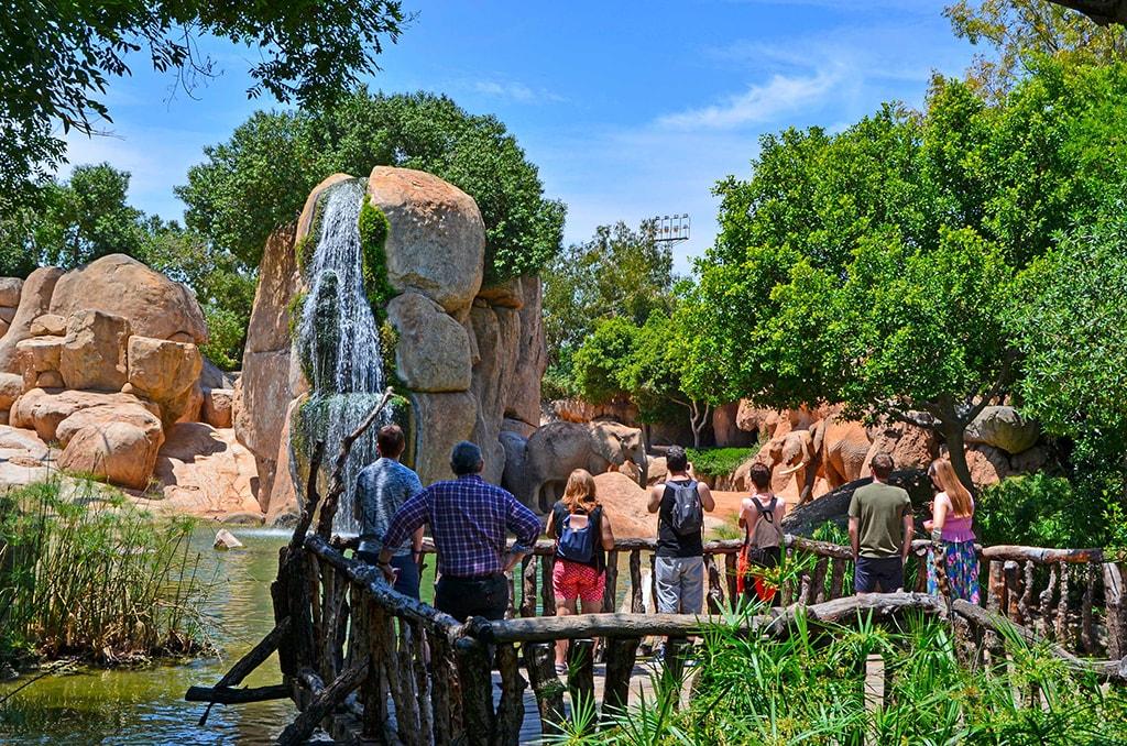BIOPARC celebra el Día Mundial del Medioambiente 2019 - Visitantes observando a los elefantes