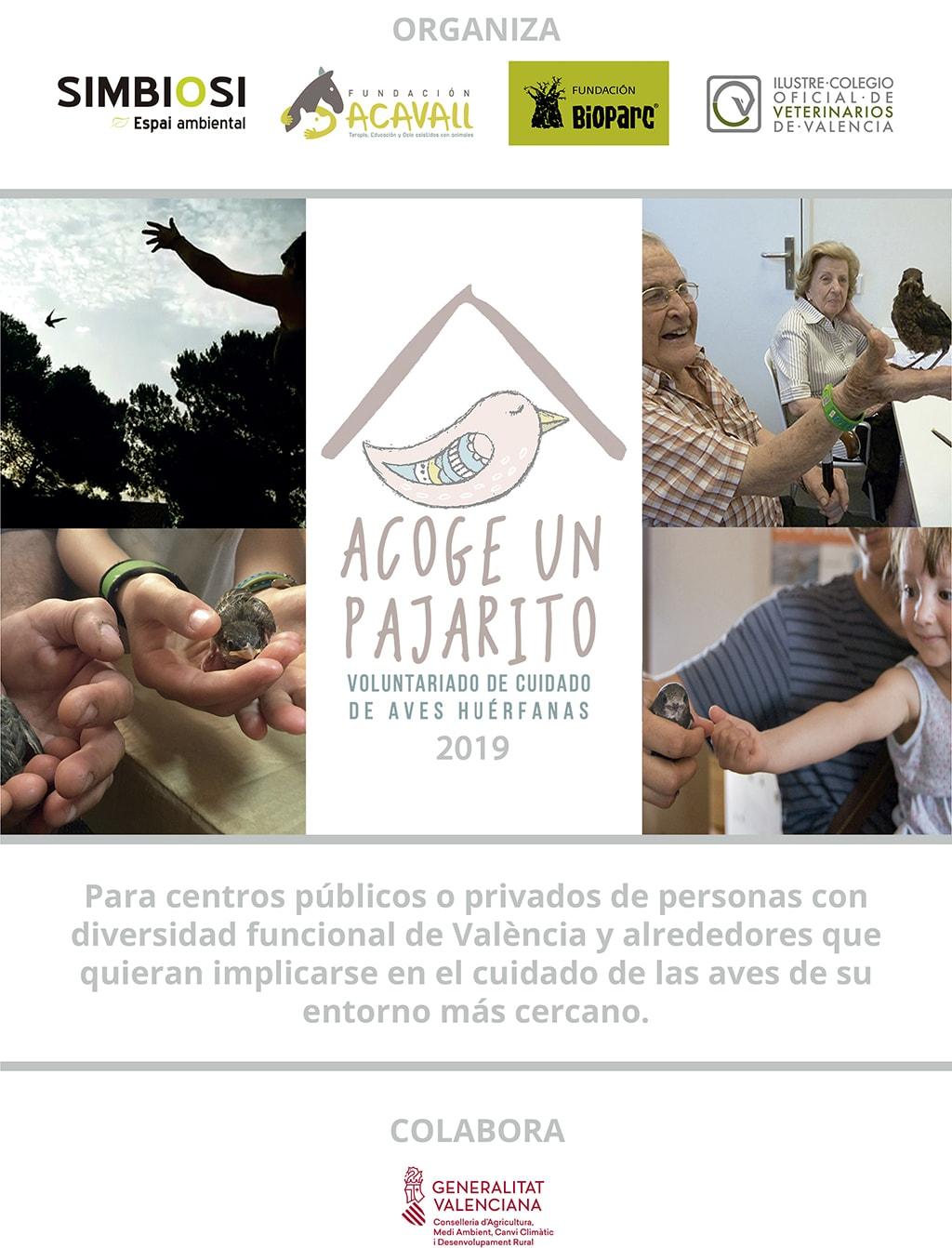 AcogeUnPajarito 2019