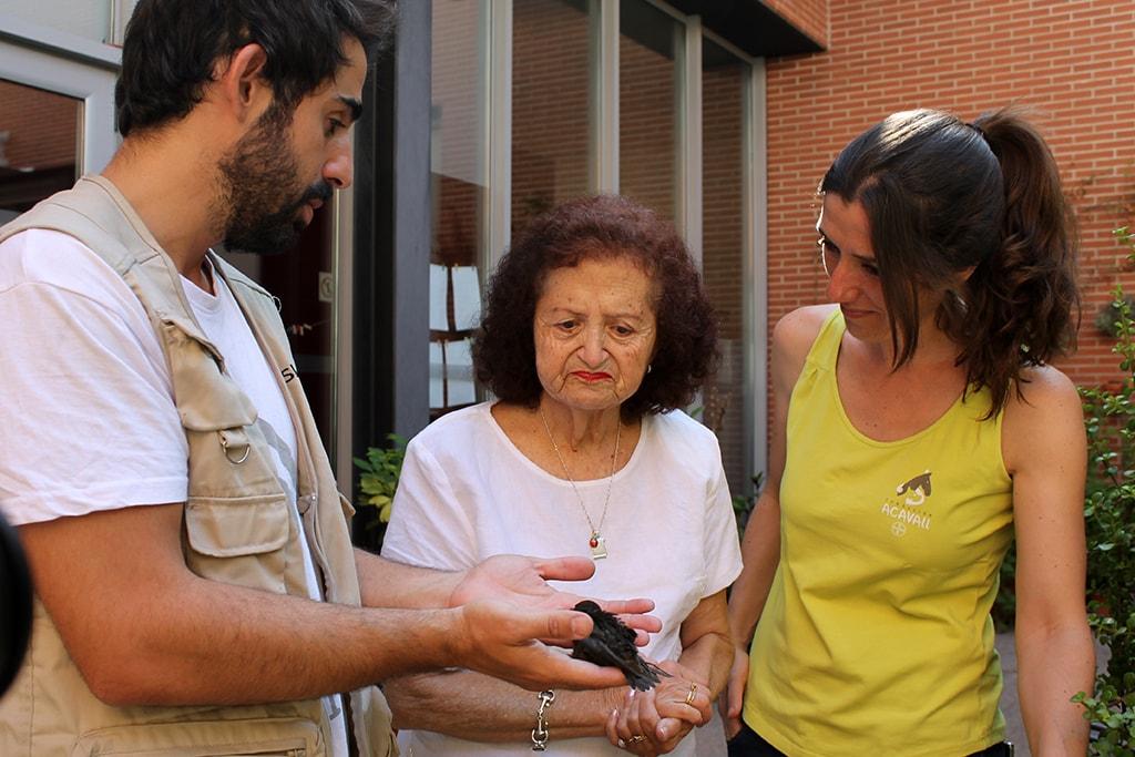 Los voluntarios comienzan la crianza de los primeros polluelos de AcogeUnPajarito 2019