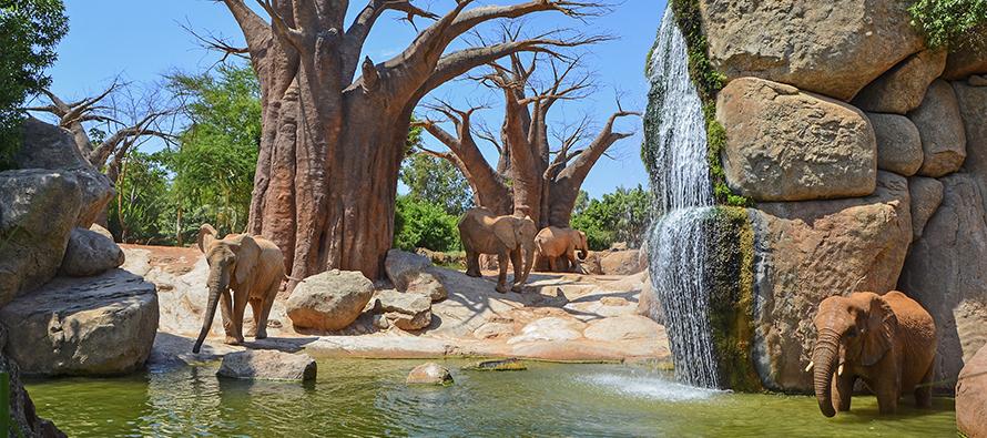 Elefantes en el lago de BIOPARC Valencia