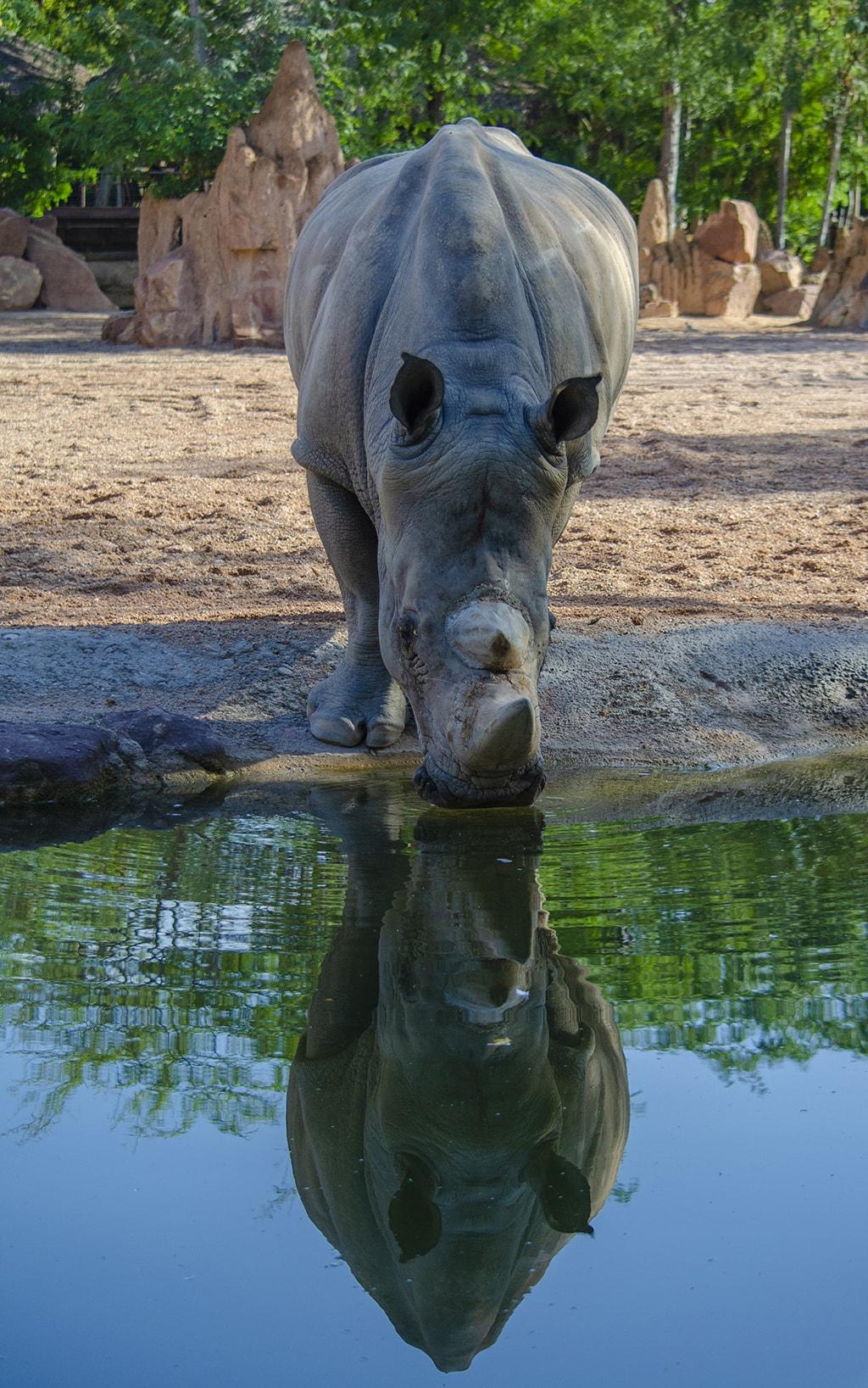 BIOPARC Valencia celebra el Día Mundial del Rinoceronte 2019