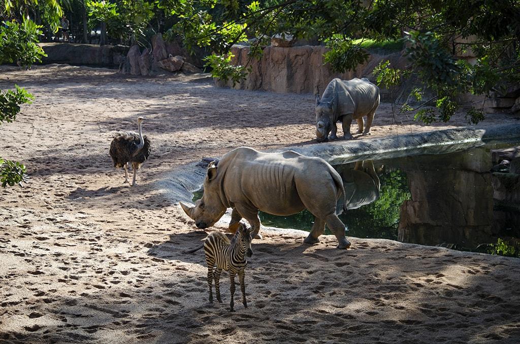 BIOPARC Valencia celebra el Día Mundial del Rinoceronte con actividades especiales