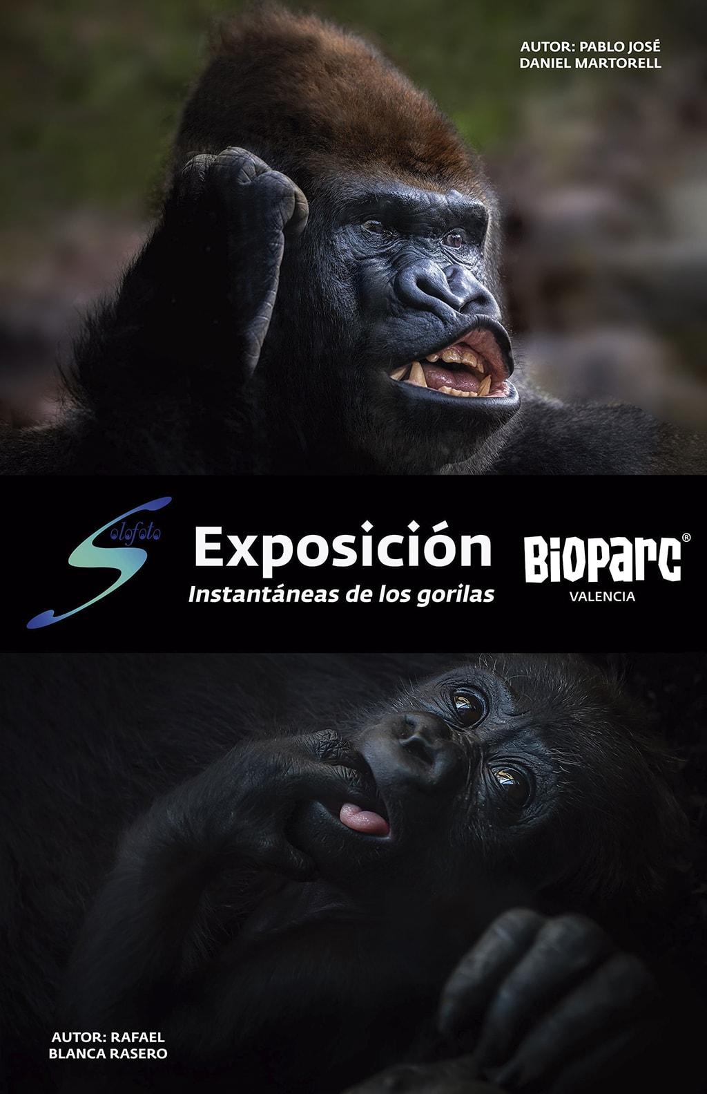 """Cartel Exposición fotográfica """"Instantáneas de los gorilas"""" en BIOPARC Valencia"""