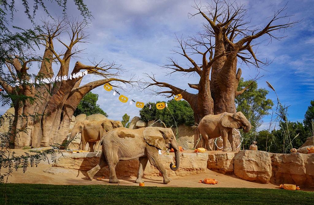 Halloween muy animal 2019 - BIOPARC Valencia - elefantes