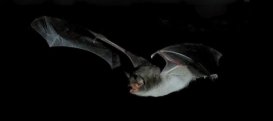 La Fundación BIOPARC celebra La noche de los murciélagos el 8 de octubre