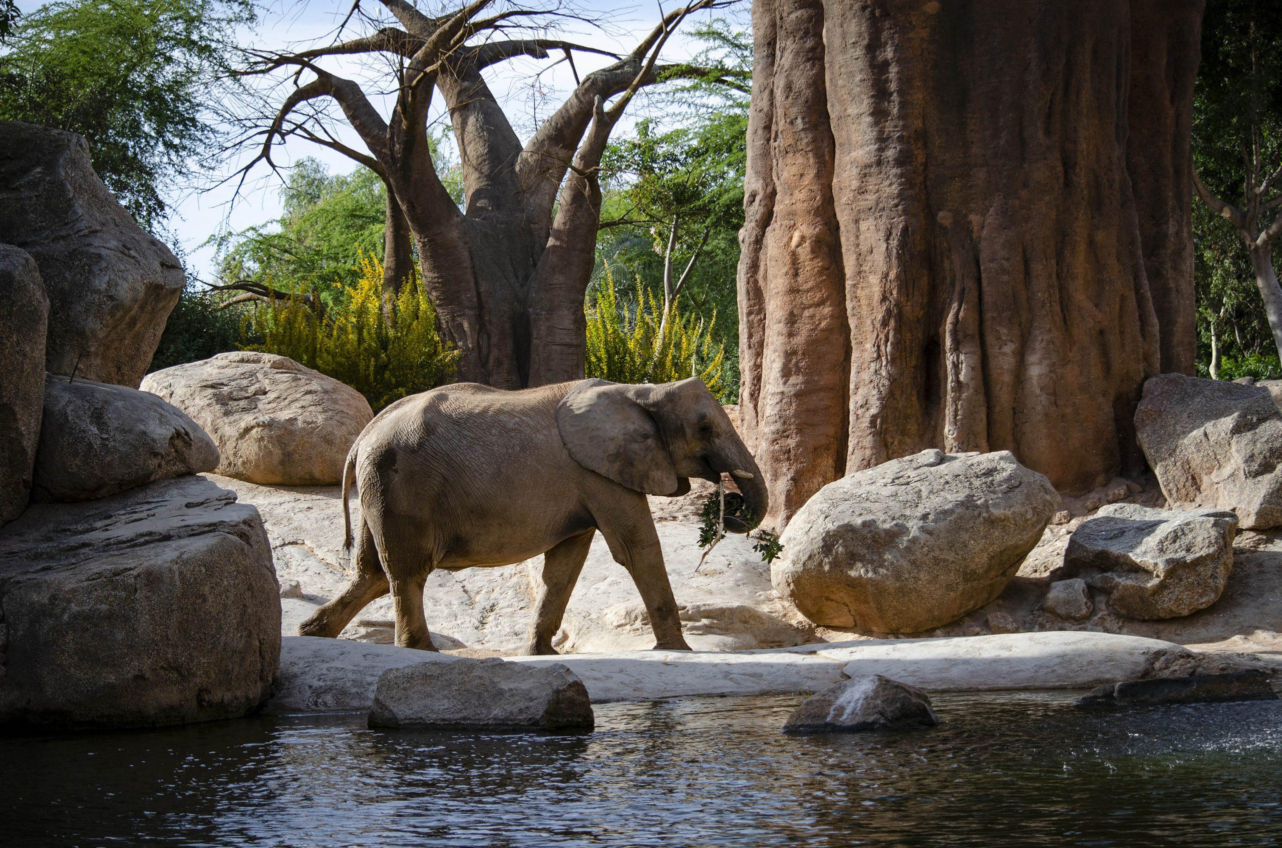 BIOPARC Valencia reconocido como Parque de Naturaleza del año en España