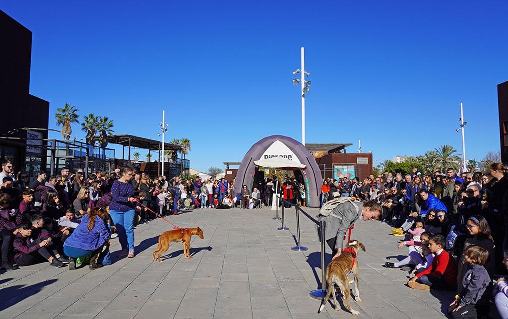 Muchos finales felices en el 15 Desfile de perros abandonados AUPA – Fundación BIOPARC