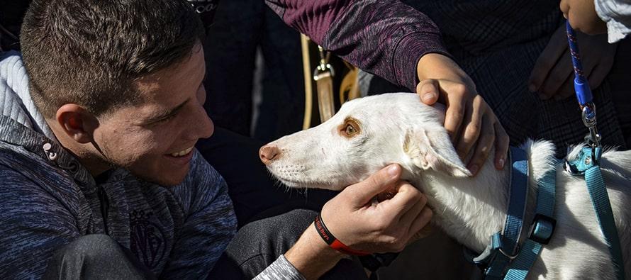 Muchos finales felices en el desfile solidario de perros abandonados 2019