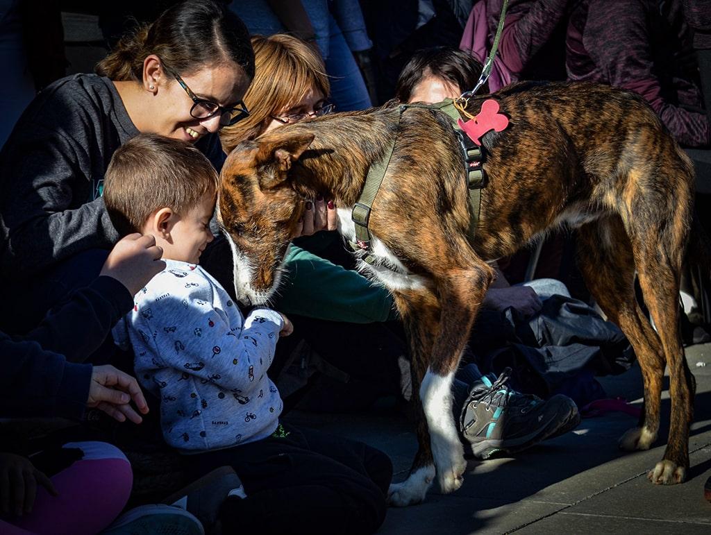 Muchos finales felices en el desfile de perros abandonados AUPA BIOPARC