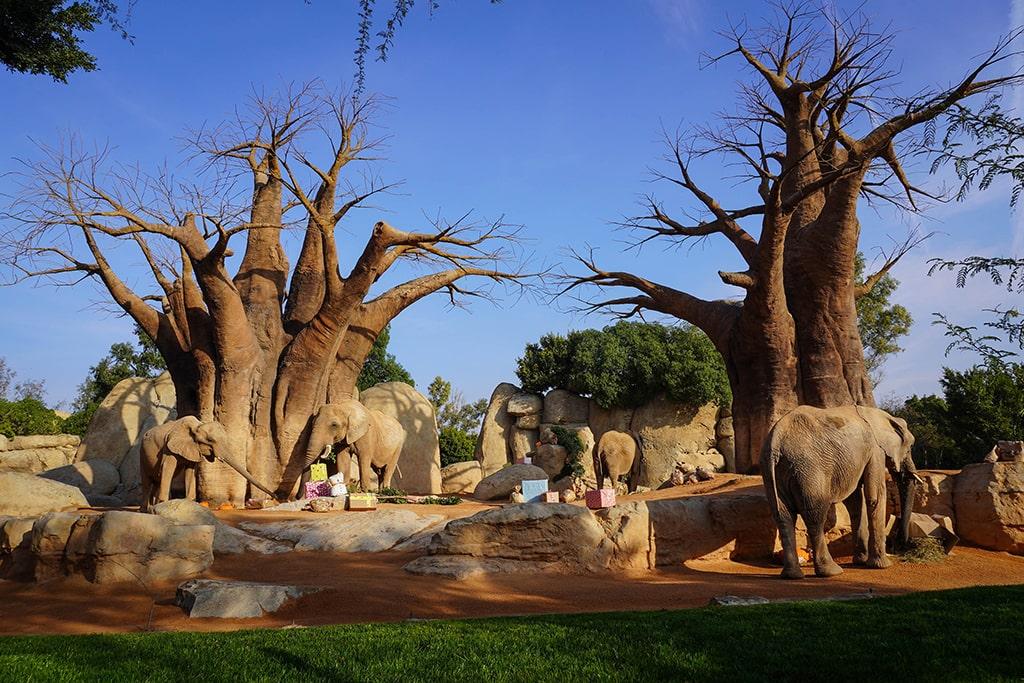 Los Reyes Magos adelantan sus regalos para los animales de BIOPARC Valencia - elefantes