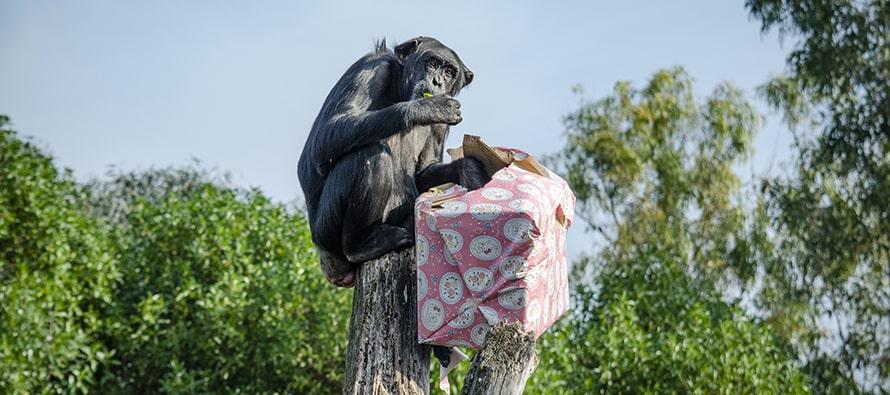 Los Reyes Magos adelantan sus regalos para los animales de BIOPARC Valencia