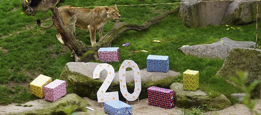 20 aniversario de la longeva leona Fa