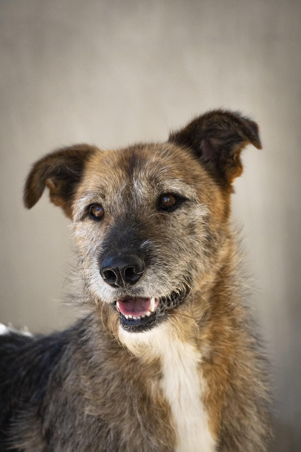 BIOPARC y AUPA celebran la gran acogida del desfile de perros abandonados el Día del perro sin raza