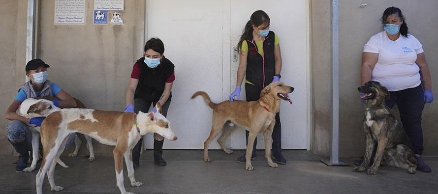 Celebran la gran acogida del desfile de perros abandonados el Día del perro sin raza